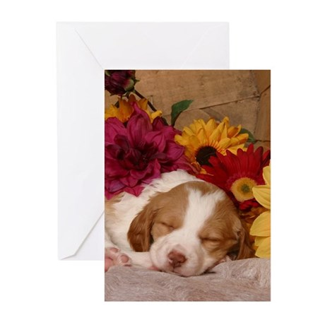 Sweet Dreams Greeting Cards (Pk of 10)