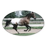 Appaloosa Galloping Oval Decal