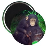 Piggyback Chimp Magnet