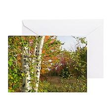 White Birch Greeting Cards (Pk of 20)