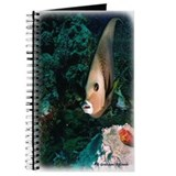 Grey Angelfish Journal