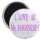I LOVE All My HAVANESE Magnet