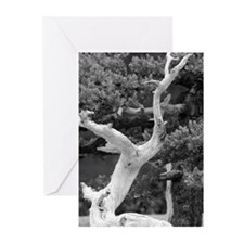 B&W bonsai - Thank You cards (6/pkg)