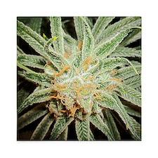 Cannabis Sativa Bud Queen Duvet
