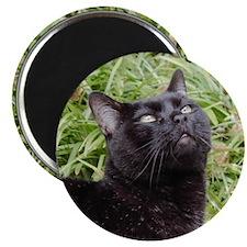Inspirational Black Cat Magnet