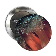 "Strawberry Anemone 2.25"" Button (100 pack)"