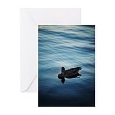 Blue Duck Greeting Cards (Pk of 10)