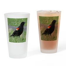 red-Winged Blackbird Lover Drinking Glass
