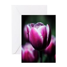Purple Beauty Greeting Cards