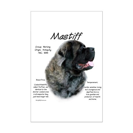 Brindle Fluffy Mastiff Mini Poster Print