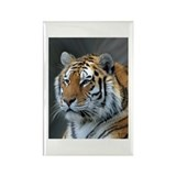 Portrait of a Tiger Rectangle Magnet