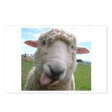 Silly Sheep Postcards (Package of 8)