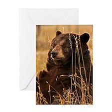 Waiting Bear Greeting Cards