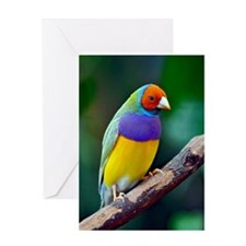 Colorful gouldian finch Greeting Cards