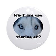 Siberian Husky Eyes What are you staring at?  Orna