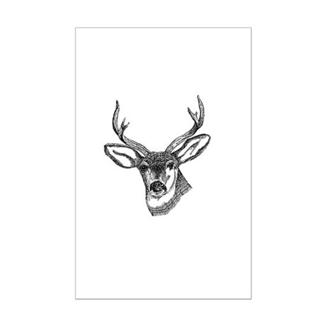 Whitetail Deer Mini Poster Print