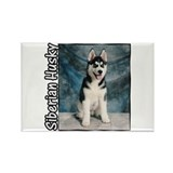 Siberian Husky Puppy Rectangle Magnet