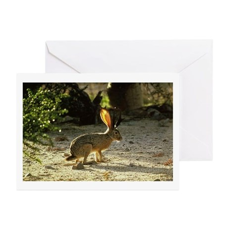 Texas Jackolope Greeting Cards (Pk of 10)