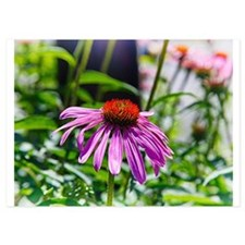 Coneflower 1 Invitations