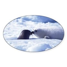 Harp Seal Oval Decal