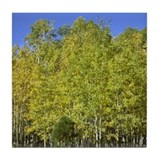 Quaking Golden Aspen Trees Tile Coaster