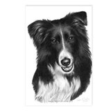 Malcolm, Border Collie Postcards (Package of 8)