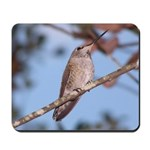 Anna's Hummingbird Mousepad