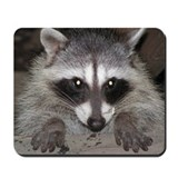 Raccoon Mousepad