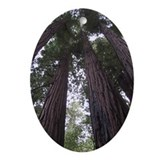 Funny Redwood Oval Ornament