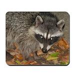 Night Visitor Raccoon Mousepad