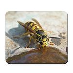 Yellowjacket Wasp Drinking Mousepad
