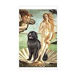 Venus & Newfoundland Sticker (Rectangle)