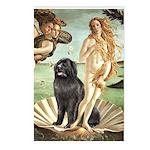 Venus & Newfoundland Postcards (Package of 8)