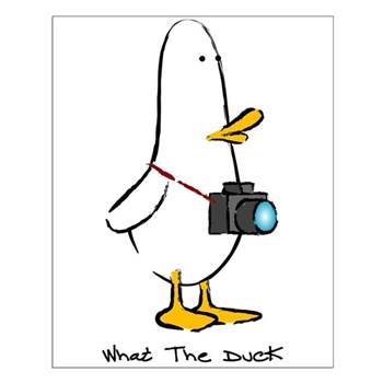 What the Duck: 1 of 4 Charact Small Poster