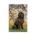 Spring / Newfoundland Rectangle Magnet (10 pack)