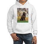 Spring / Newfoundland Hooded Sweatshirt