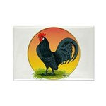 Sunrise Dutch Bantam Rectangle Magnet (10 pack)
