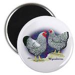 Silver Wyandotte Chickens Magnet