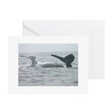nature humpback whales Greeting Cards (6)