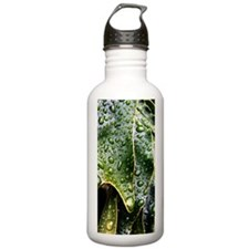 Wet Leaf Water Bottle