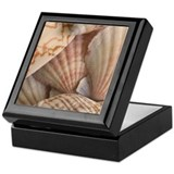 Seashells Keepsake Box