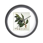 Coffee Botanical Print Wall Clock