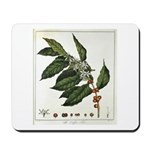 Coffee Botanical Print Mousepad