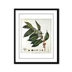 Coffee Botanical Print Framed Panel Print