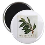 Coffee Botanical Print Magnet
