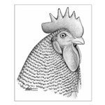 Plymouth Rock Rooster Small Poster