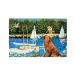 Sailboats / Nova Scotia Rectangle Magnet (10 pack)