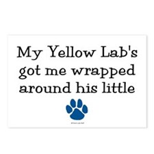Wrapped Around His Paw (Yellow Lab) Postcards (Pac