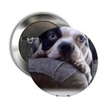 "SAD DOG 2.25"" Button (100 pack)"