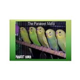 """Parakeet Humor #7"" Rectangle Magnet (100 pack)"